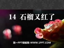 《石榴又红了》PPT课件3