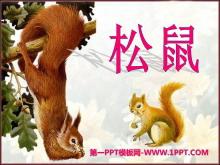 《松鼠》PPT课件10