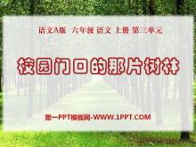《校园门口的那片树林》PPT课件
