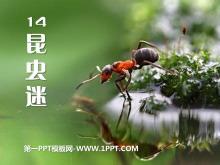 《昆虫迷》PPT课件2