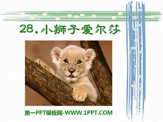 《小狮子爱尔莎》PPT课件8