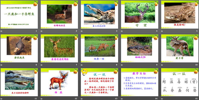 《一只鹿和一千条鳄鱼》PPT课件