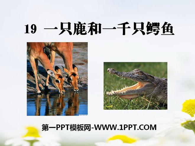 《一只鹿和一千条鳄鱼》PPT课件2