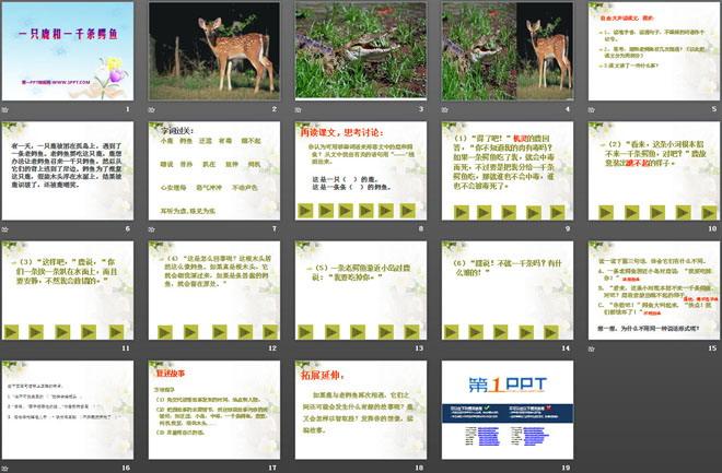 《一只鹿和一千条鳄鱼》PPT课件3