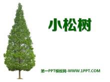 《小松树》PPT课件2
