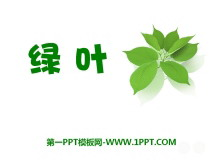《绿叶》PPT课件