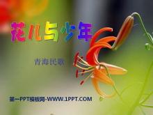 《花儿与少年》PPT课件