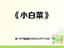 《小白菜》PPT�n件