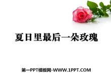 《夏日里最后一朵玫瑰》PPT课件2