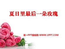 《夏日里最后一朵玫瑰》PPT课件3