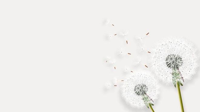 四张清新文艺手绘幻灯片背景图片免费下载