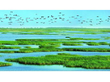 四张精美绿色大自然生态PPT背景图片
