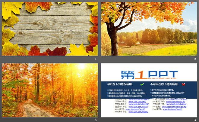 三张精美秋天落叶PPT背景图片免费下载