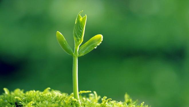 六张植物嫩芽PPT背景图片