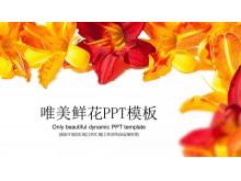鲜艳花卉背景唯美平安彩票官网免费下载