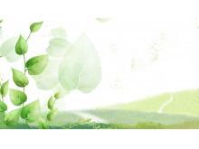 绿色唯美叶子幻灯片背景图片