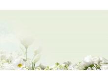 淡雅绿色背景白色花卉PPT背景图片