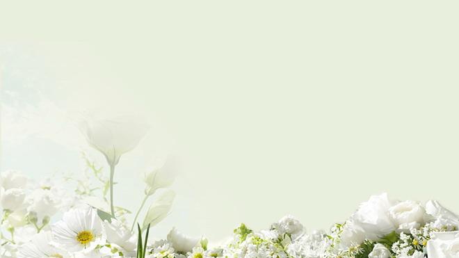 这是一张淡雅绿色背景白色花卉PPT背景图片,第一PPT提供精美植物幻灯片背景图片免费下载; 关键词:绿色淡雅PPT背景图片,花卉、鲜花、花朵PowerPoint背景图片,.jpg格式;