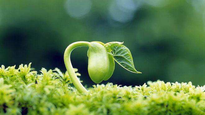 绿色清新植物嫩芽PPT背景图片