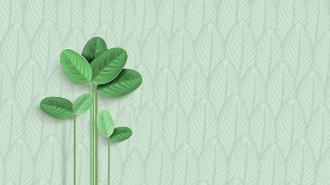 6張清新綠色葉子ppt背景圖片