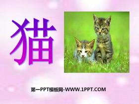 《猫》家养小动物PPT课件