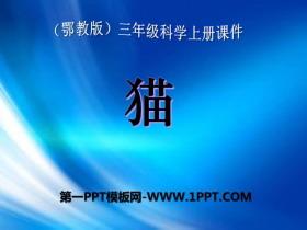 《�》家�B小�游�PPT�n件2