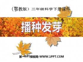 《播种发芽》PPT课件