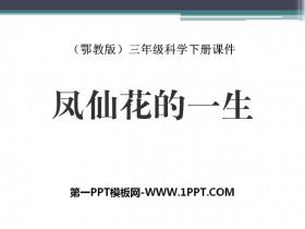 《凤仙花的一生》PPT课件
