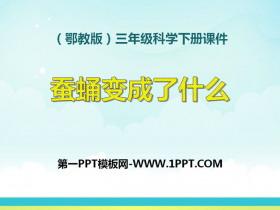 《蚕蛹变成了什么》PPT课件2