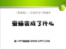 《蚕蛹变成了什么》PPT课件3