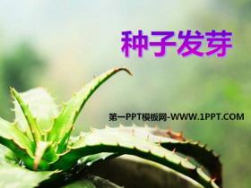 《种子发芽》PPT课件4