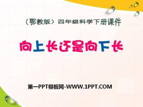 《向上长还是向下长》PPT课件2