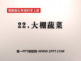 《大棚蔬菜》农田PPT课件