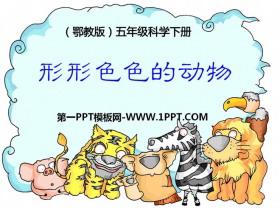 《形形色色的动物》PPT课件