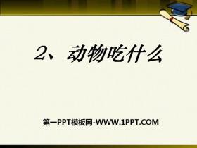 《动物吃什么》PPT课件2
