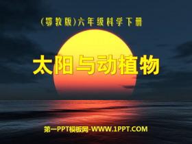 《太阳与动植物》PPT课件