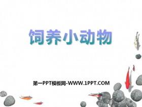 《饲养小动物》和动物交朋友PPT课件3