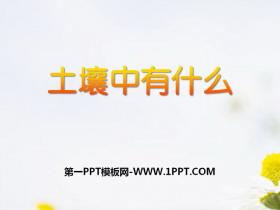 《土壤里有什么》植物生活的土地PPT课件4
