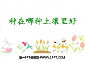 《种在哪种土壤里好》植物生活的土地PPT课件