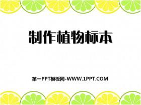 《制作植物标本》认识更多的生物PPT课件