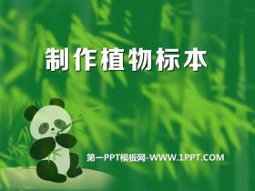 《制作植物�吮尽氛J�R更多的生物PPT�n件2