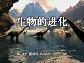 《生物的进化》生物与环境PPT课件