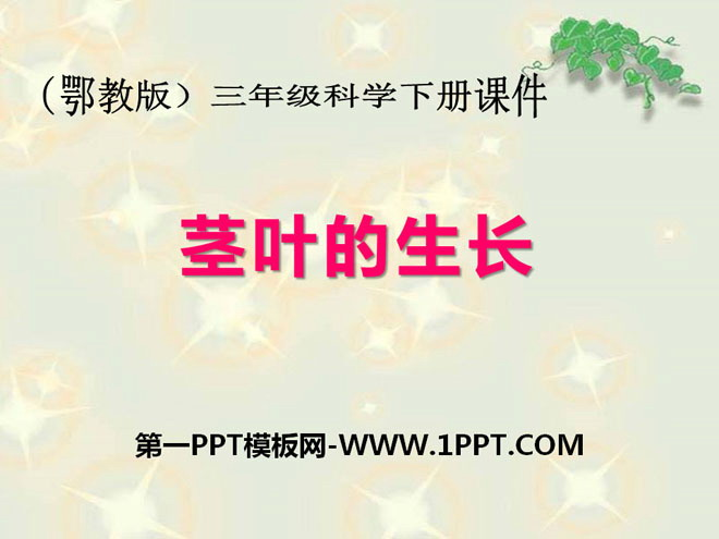 《茎叶的生长》PPT课件