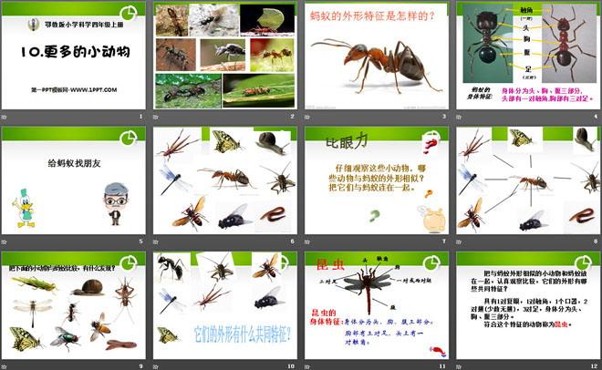 科学课件 鄂教版四年级科学上册 《更多的小动物》寻访校园里的动植物