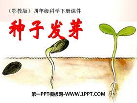 《种子发芽》PPT课件2