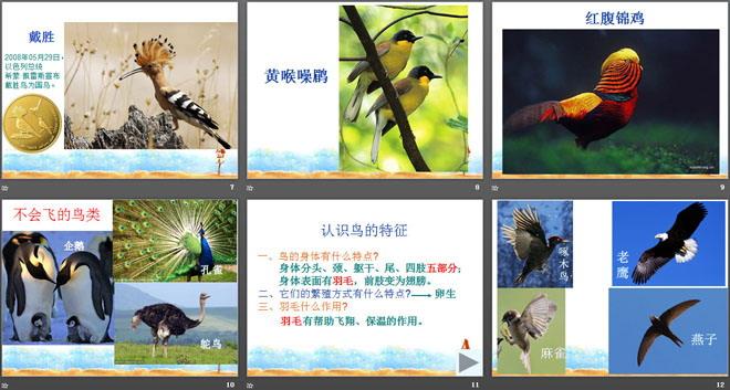 《林中的鸟》走进树林PPT课件2