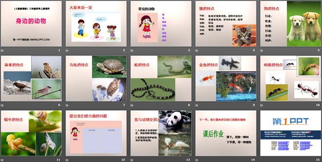 《身边的动物》和动物交朋友PPT课件