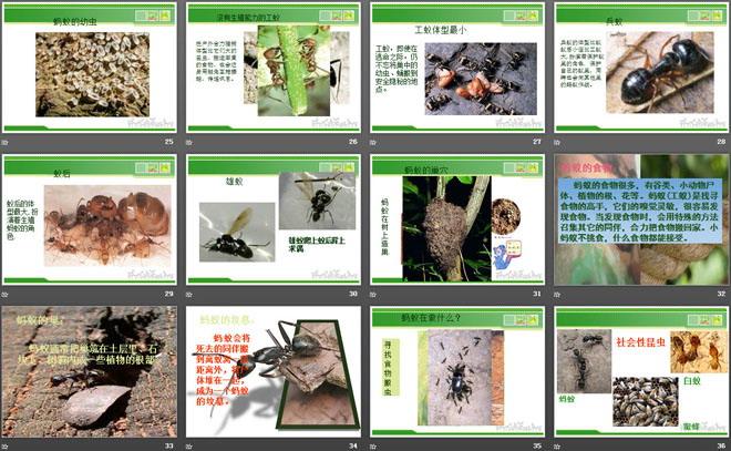《校园里的动物》和动物交朋友PPT课件