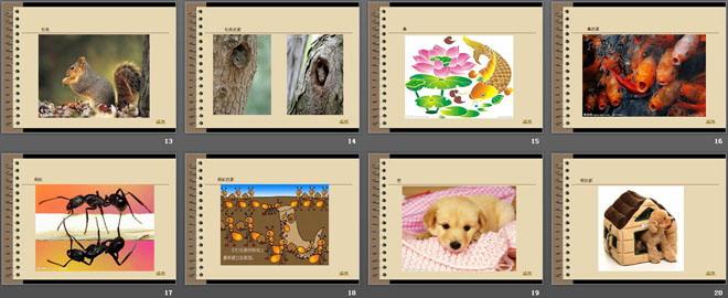 《动物的家》和动物交朋友PPT课件