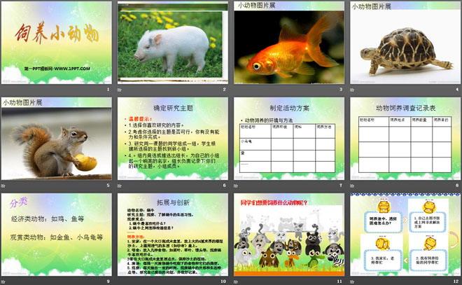 《饲养小动物》和动物交朋友PPT课件
